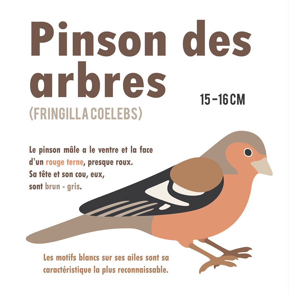 Clemence sanches pinson1