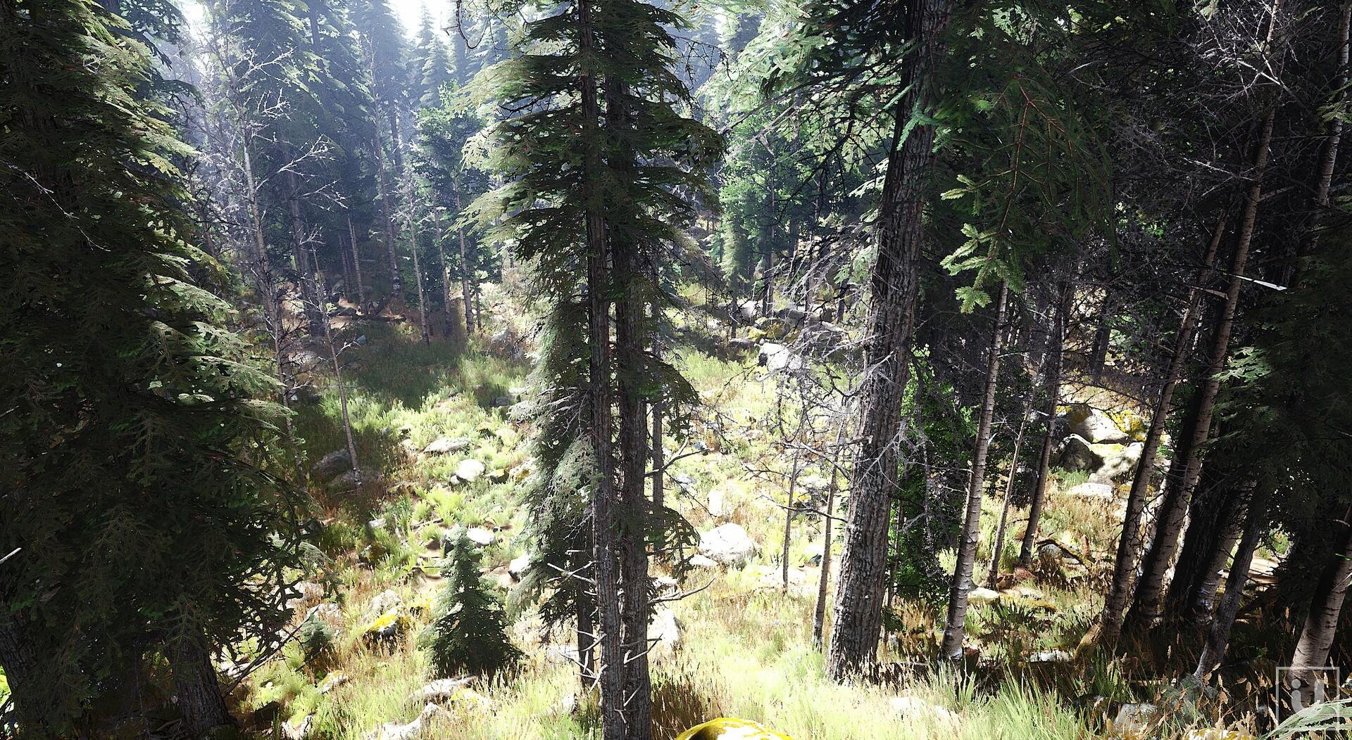 ArtStation - Unreal Engine - The Forest - Volumetric Fog and HDRI