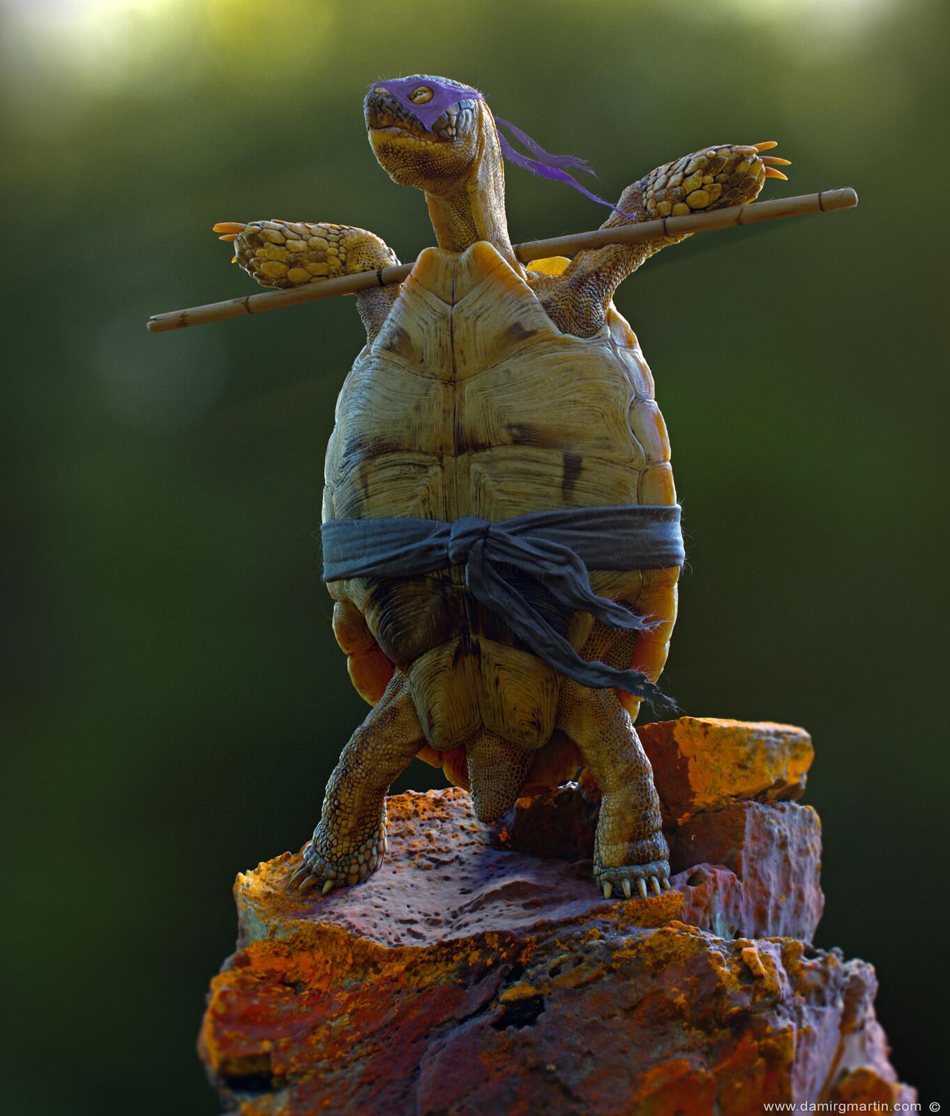 The Real Ninja Turtle, Err Tortoise.