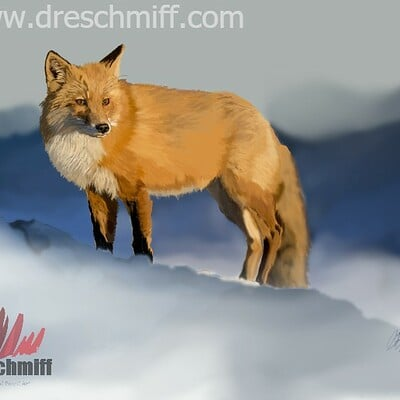 Andre smith the serious fox low rez