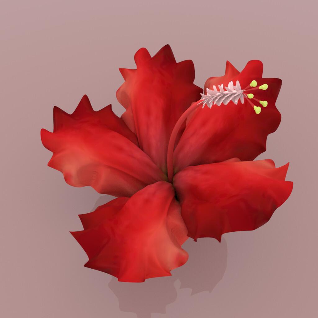 Artstation Soft Modeling Torso Anatomy Hibiscus Flower Nurbs