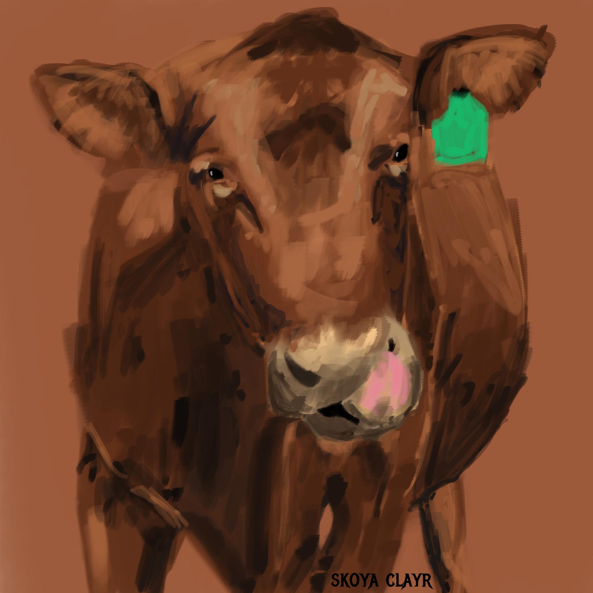 Skoya clayr cow