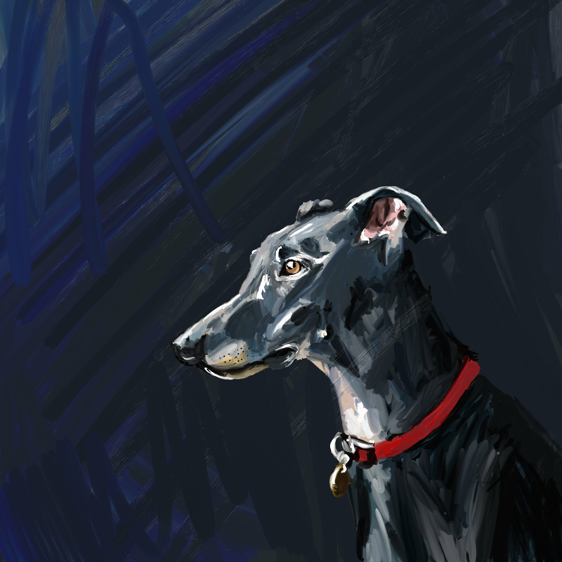 Skoya clayr greyhound2