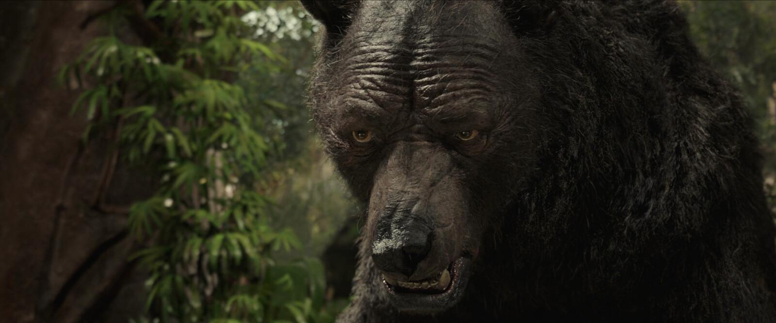 Baloo close up 02
