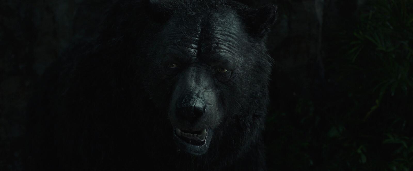 Baloo close up 04