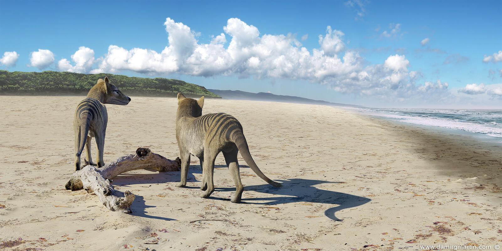 Thylacine At The Beach