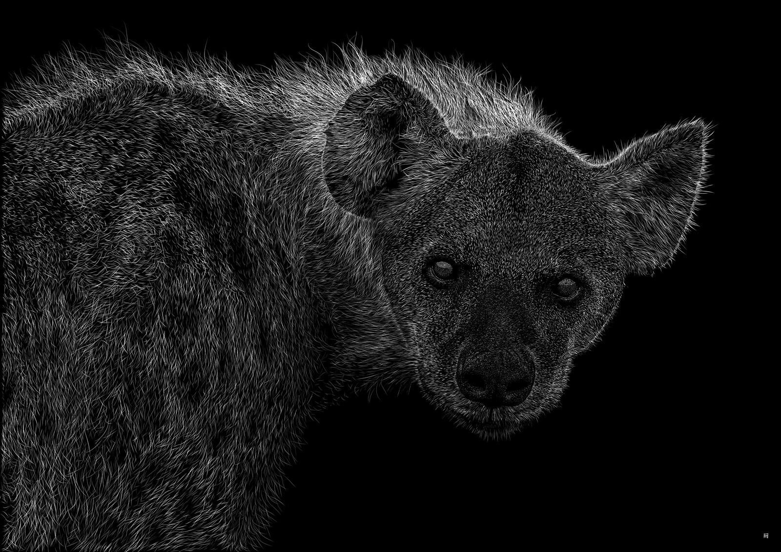 hyaenidae Digital scratchboard, feb. 2019