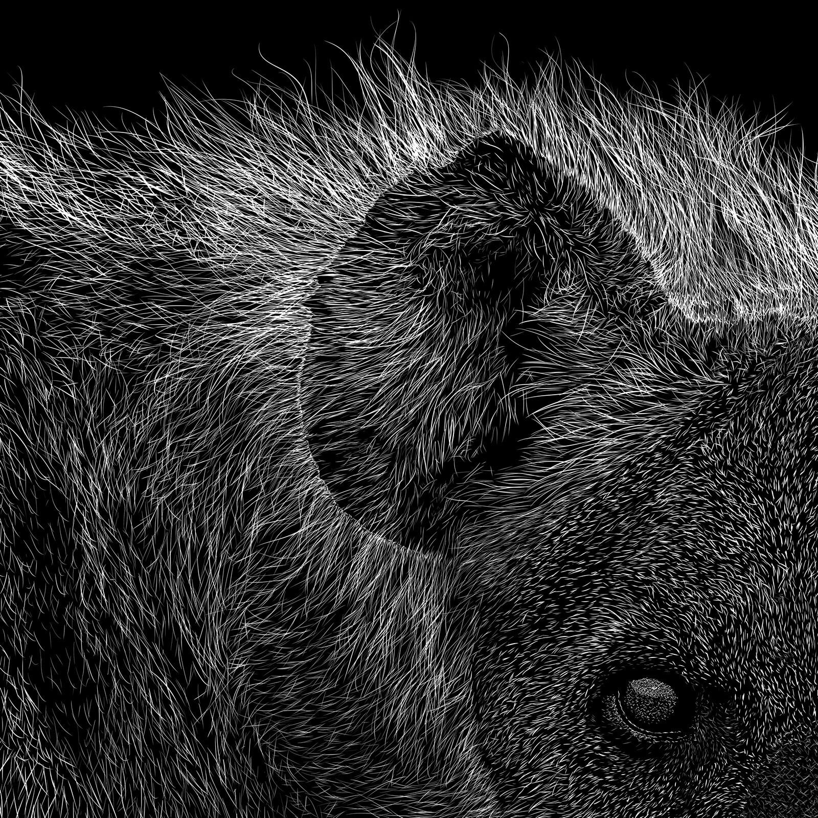hyaenidae, eye-ear close-up Digital scratchboard, feb. 2019