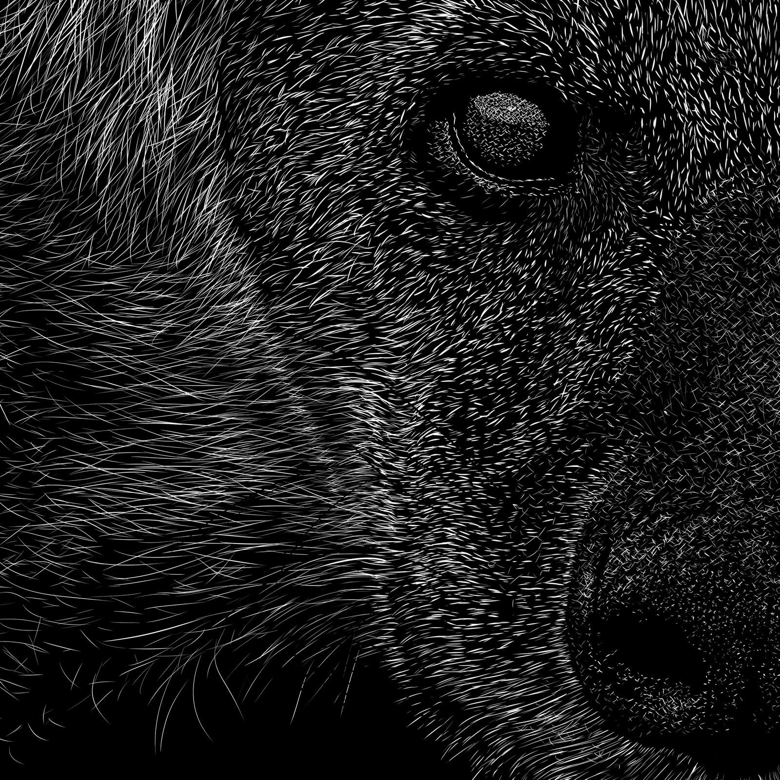 hyaenidae, eye-nose close-up Digital scratchboard, feb. 2019