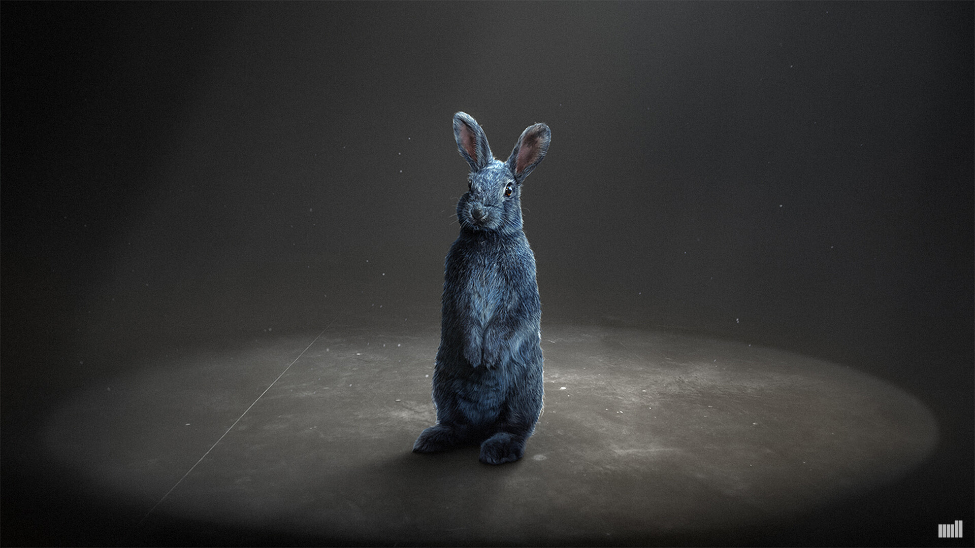 Cameron johnson rabbit3