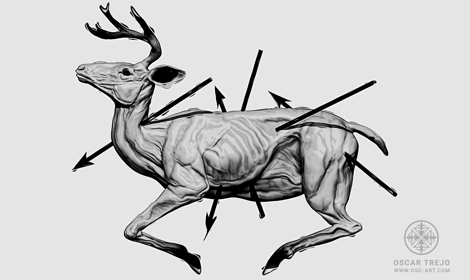 Oscar trejo deer oscartrejo1