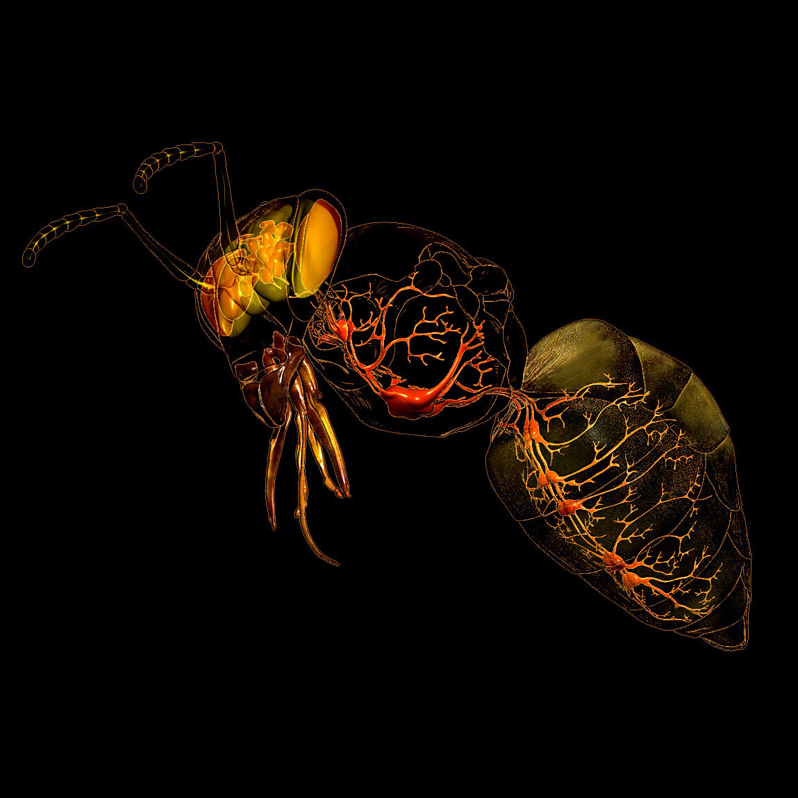 Eric keller bee nervous system insta 02