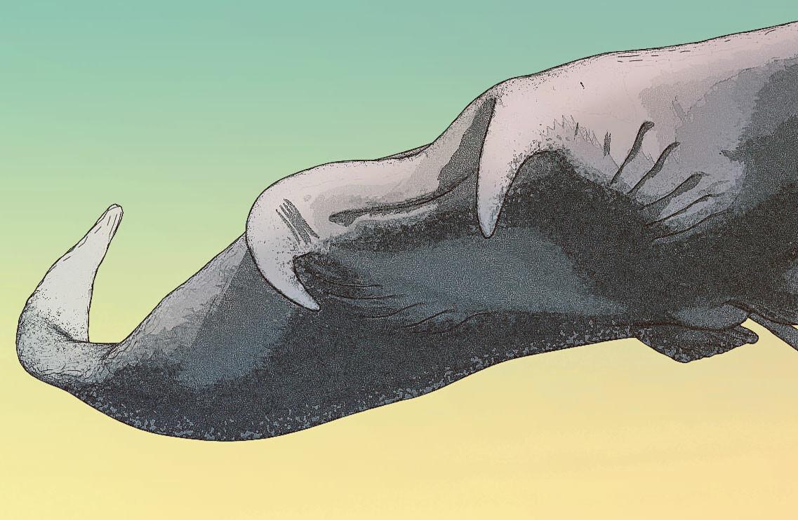 Hunter of the flying stingrays - Closeup 03