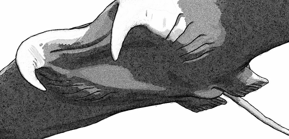 Hunter of the flying stingrays - Linework closeup 04