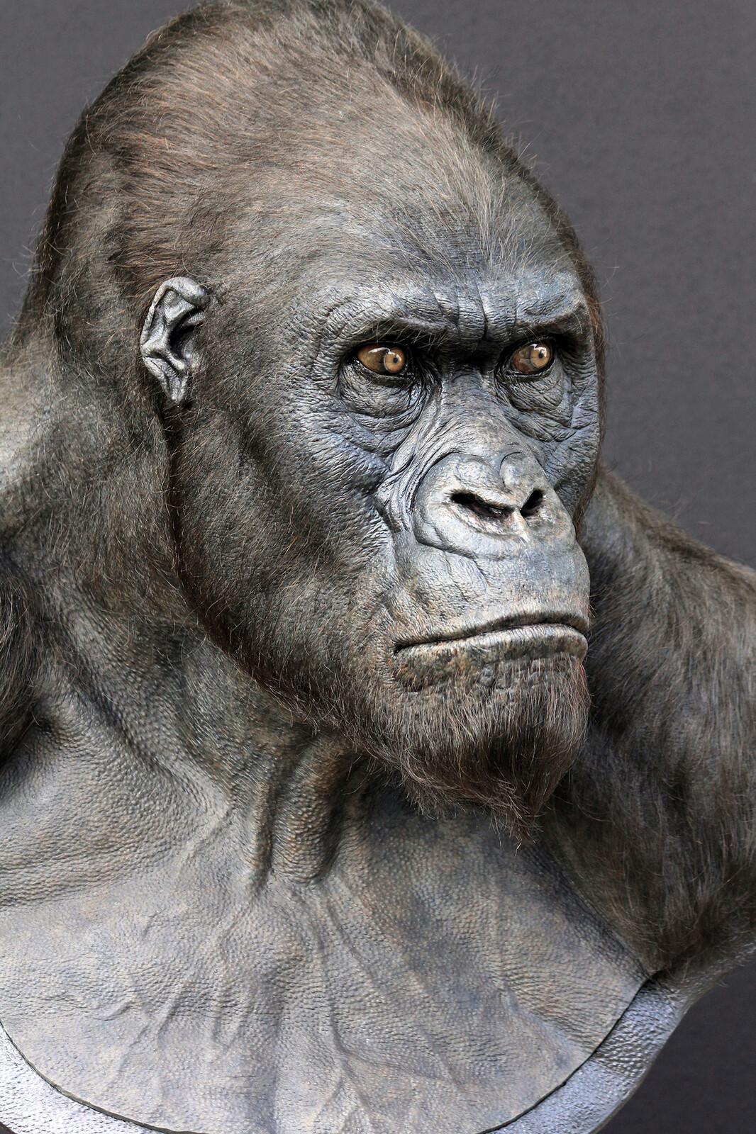 The Legend of Tarzan, 2014/ Akut Life Size Display Bust