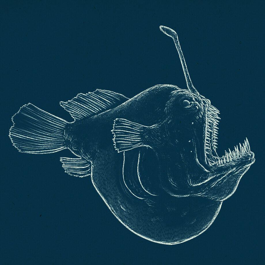 Dirk wachsmuth anglerfish npr 01 bydirkwachsmuth