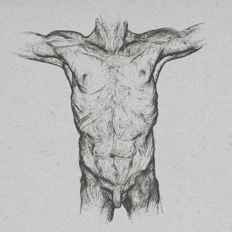 Dirk wachsmuth body chest npr comp bydirkwachsmuth