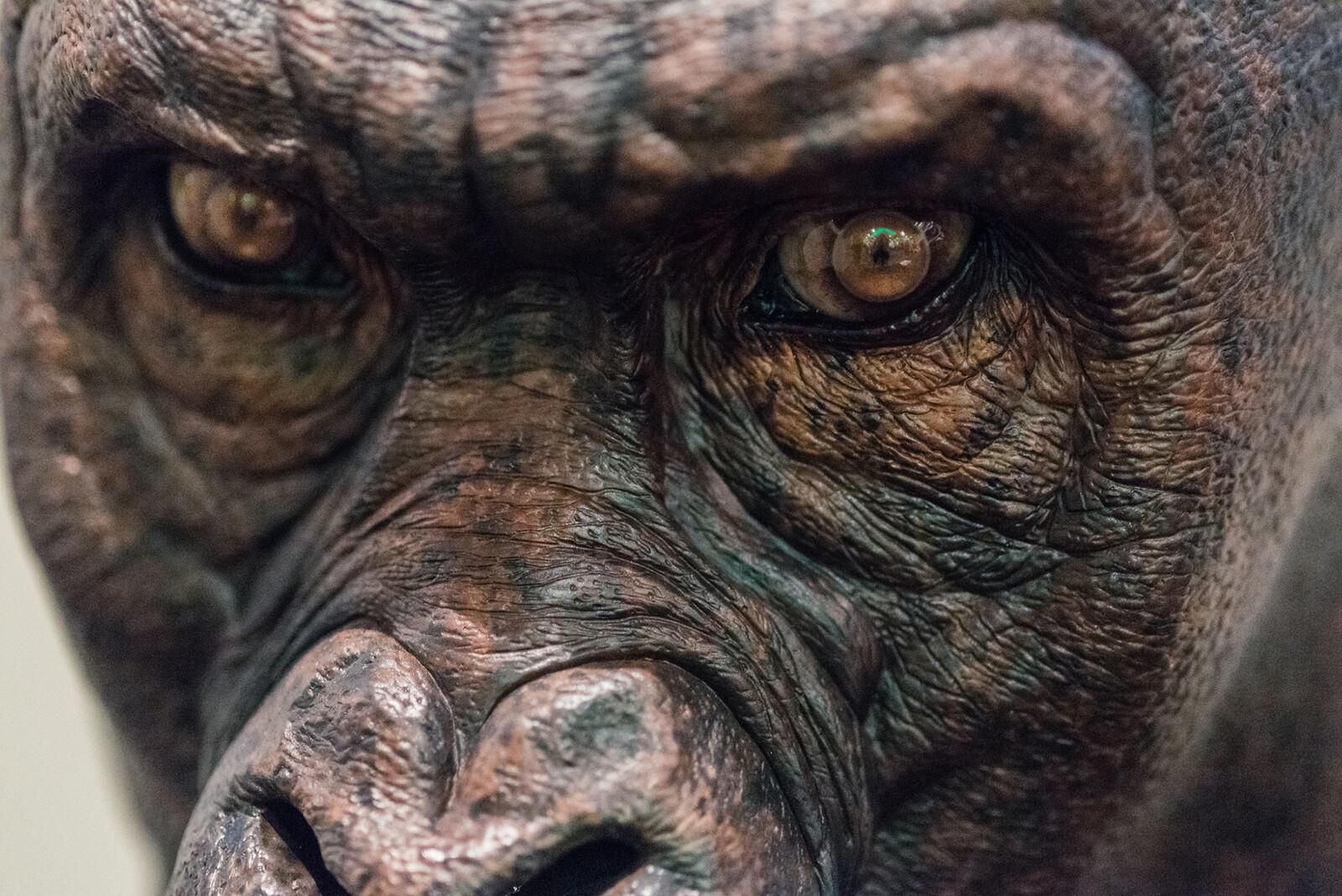 The Legend of Tarzan / Akut  Concept Close up