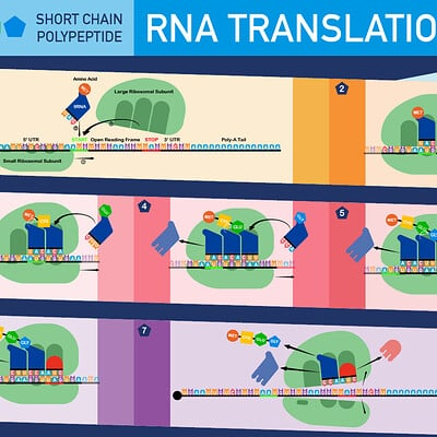 Daniel bernal 01 rna translation bernalstudio 01