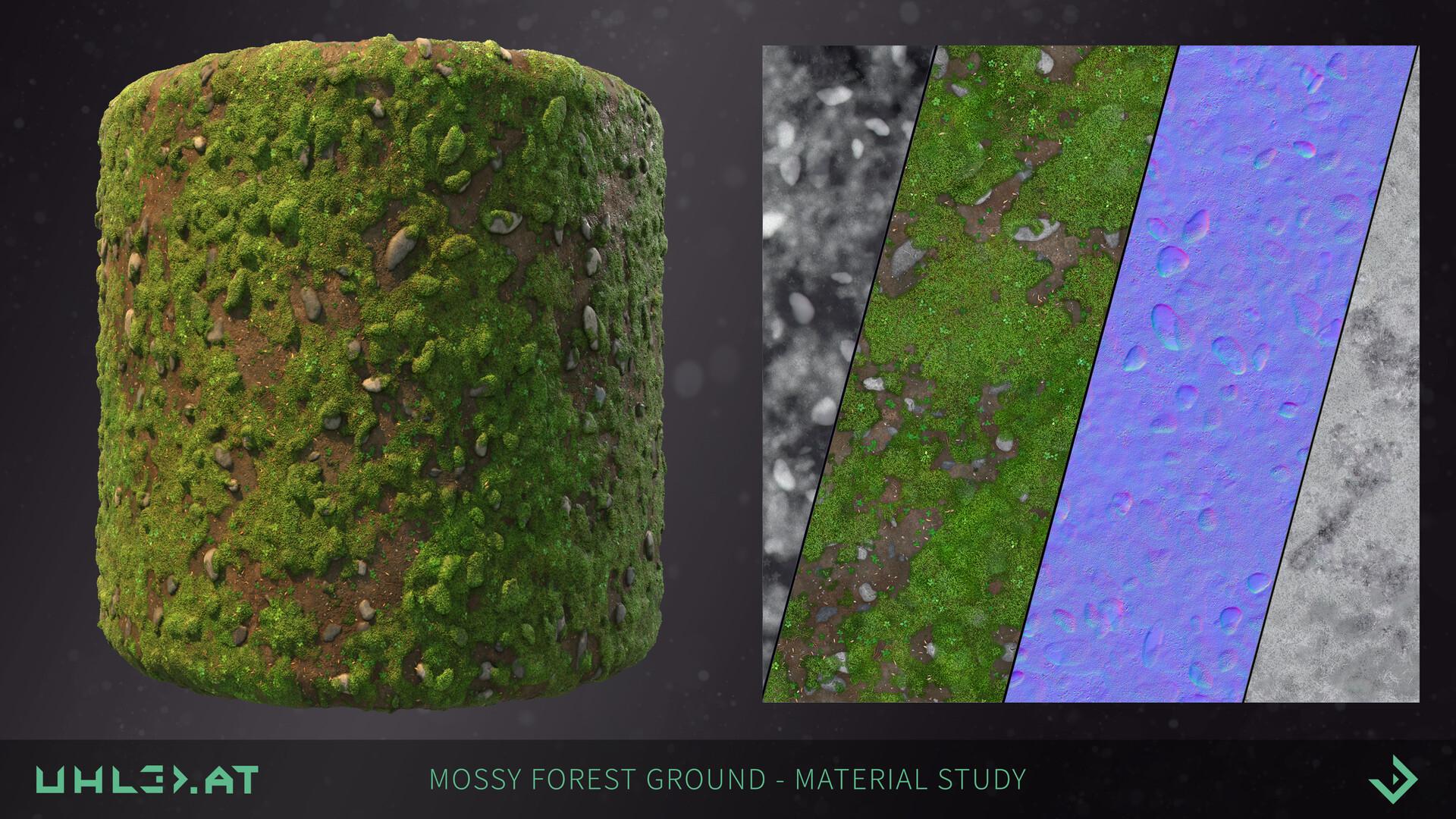 Dominik uhl mossy forest ground 02