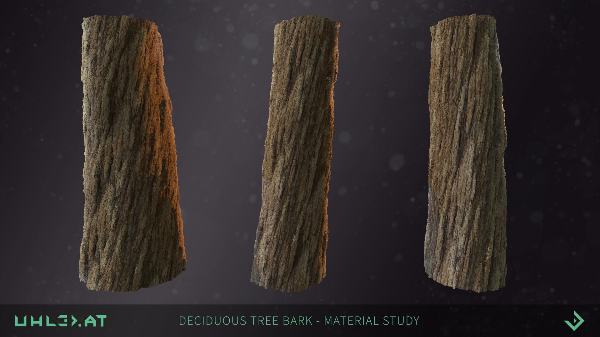 Dominik uhl deciduous tree bark 03