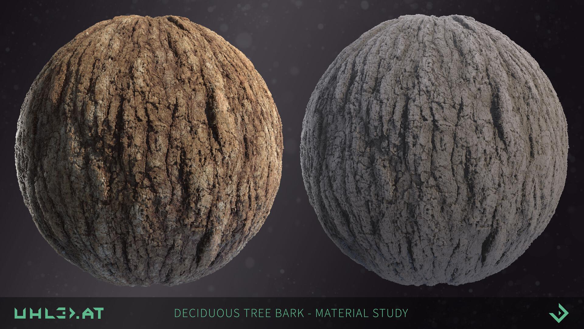 Dominik uhl deciduous tree bark 01