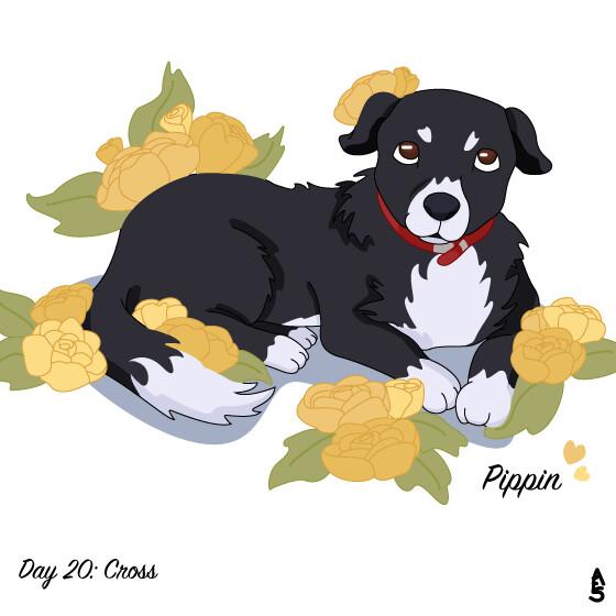 20: Cross (Collie/Labrador)