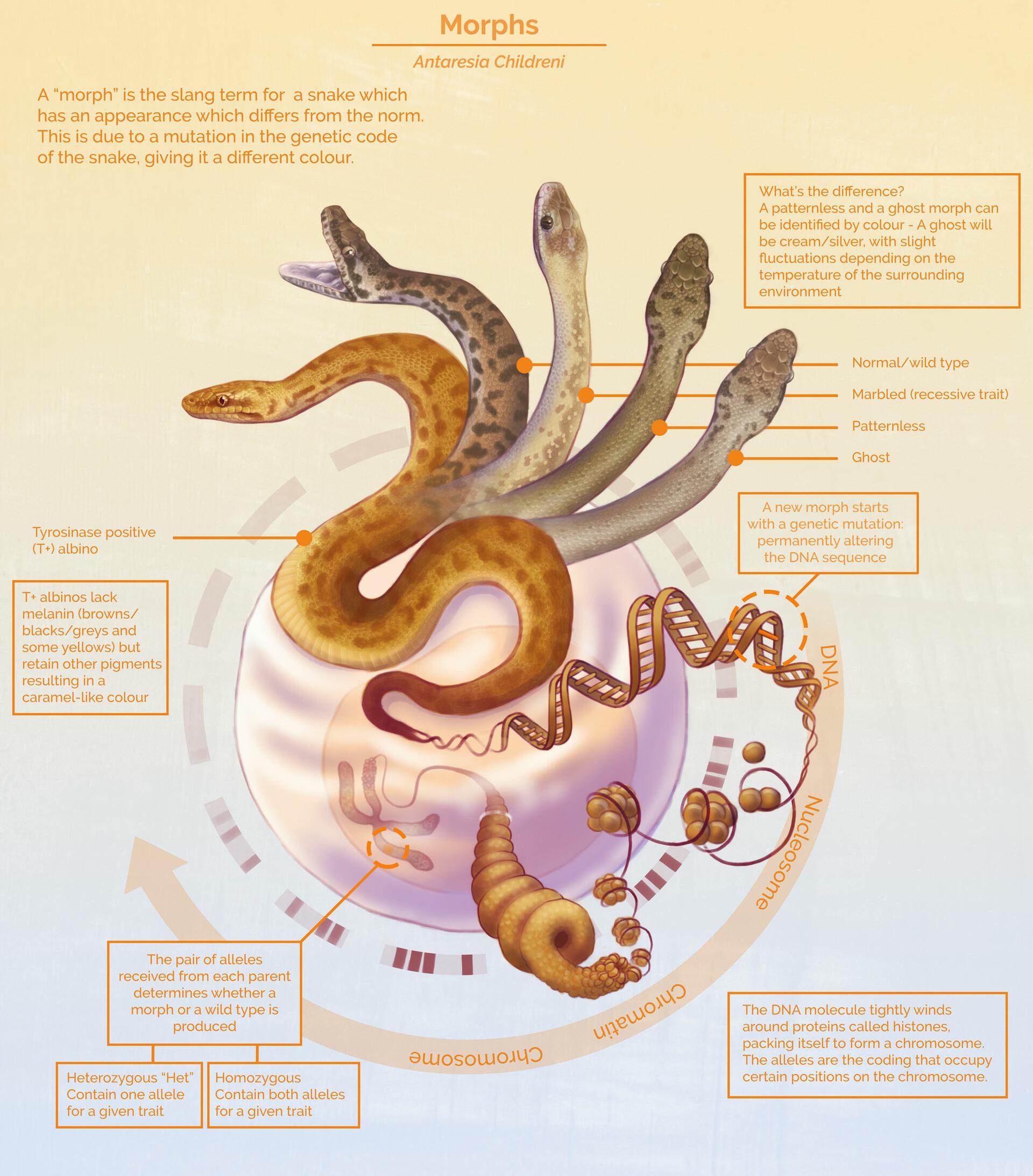 Leonie Herson - Childrens python Morphs