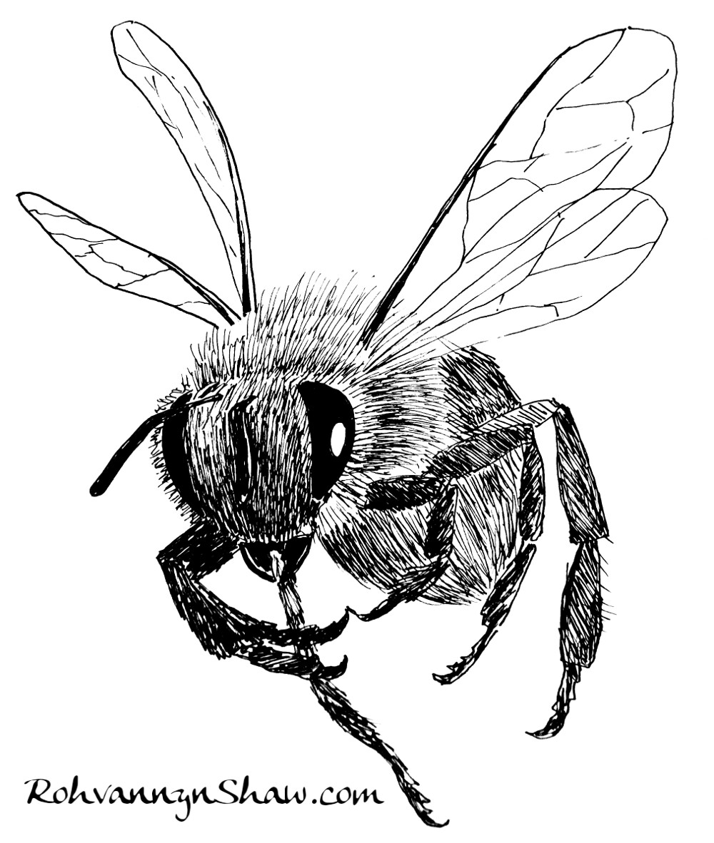 Rohvannyn shaw bee small