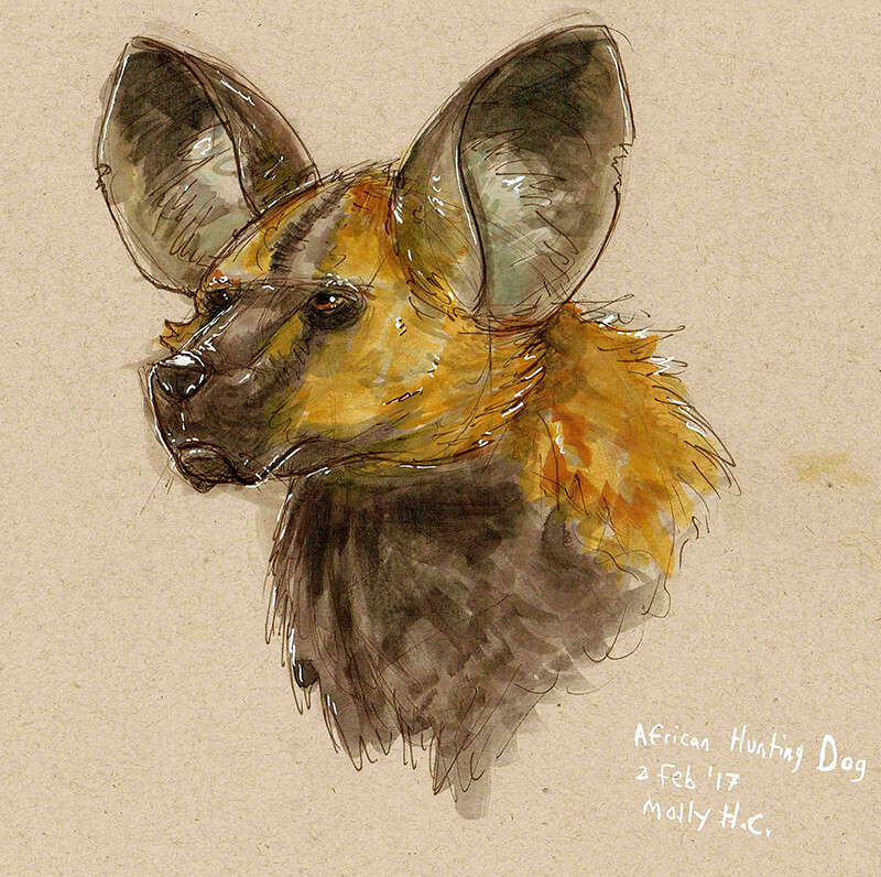"""African Hunting Dog""