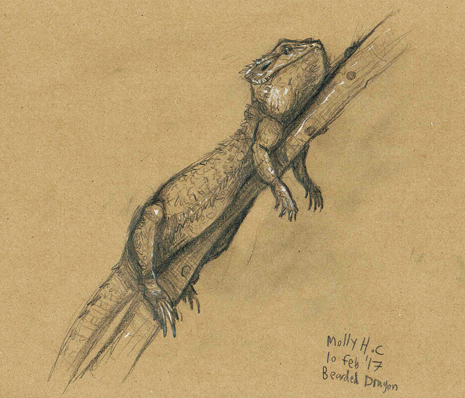 """Bearded Dragon""
