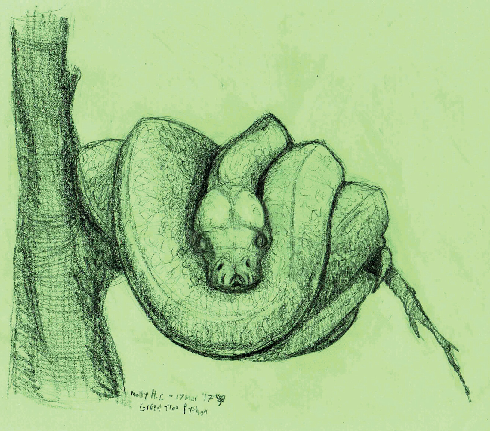 """Green Tree Python""