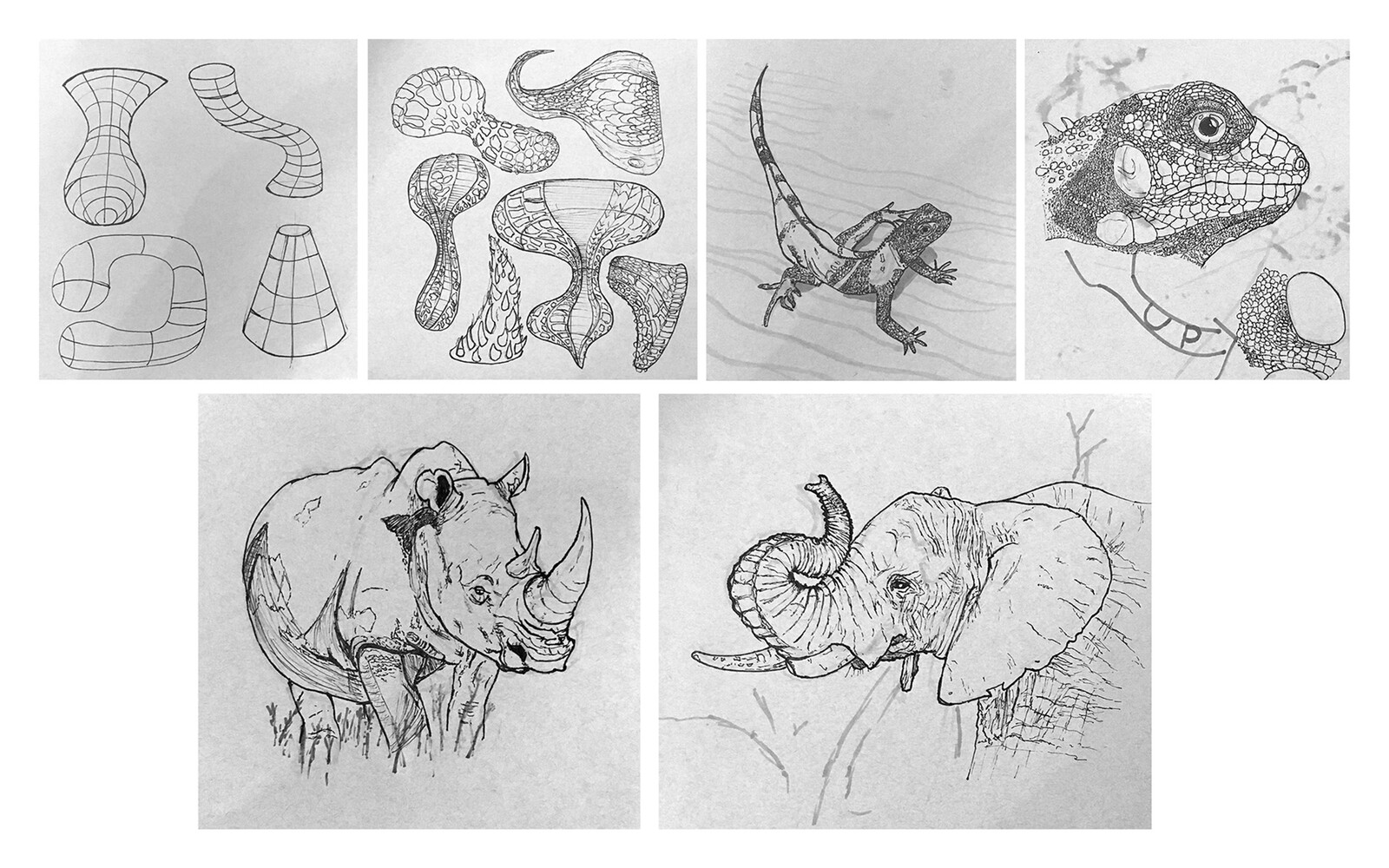 Sketches (Animal)