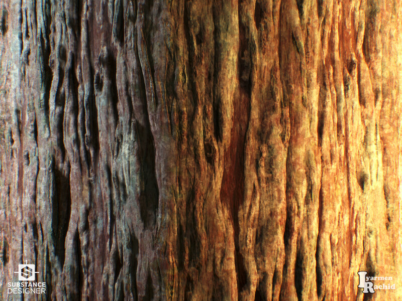 Rachid iyarmen close up bark