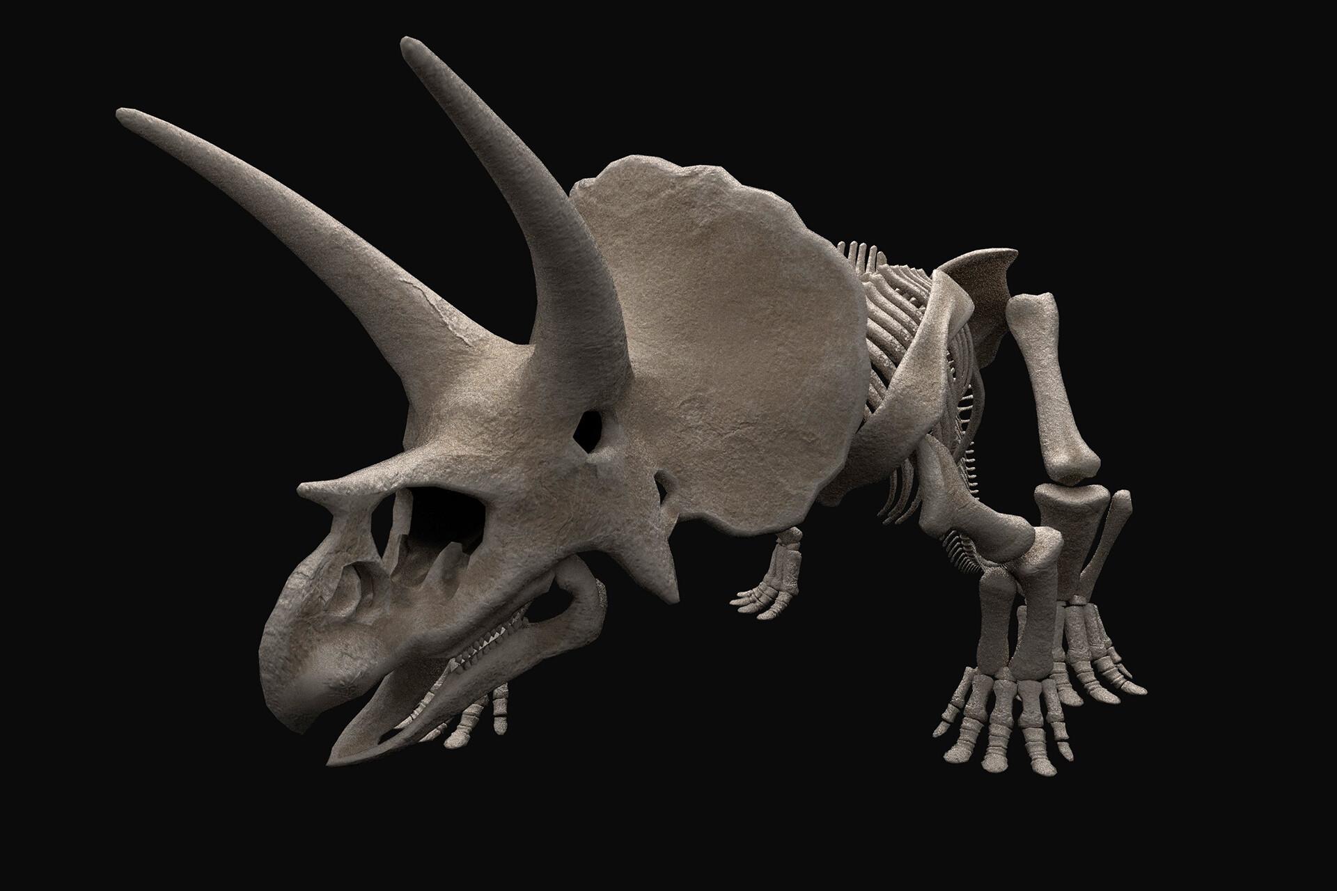 Rebecca sinclair triceratopsquarterjpg