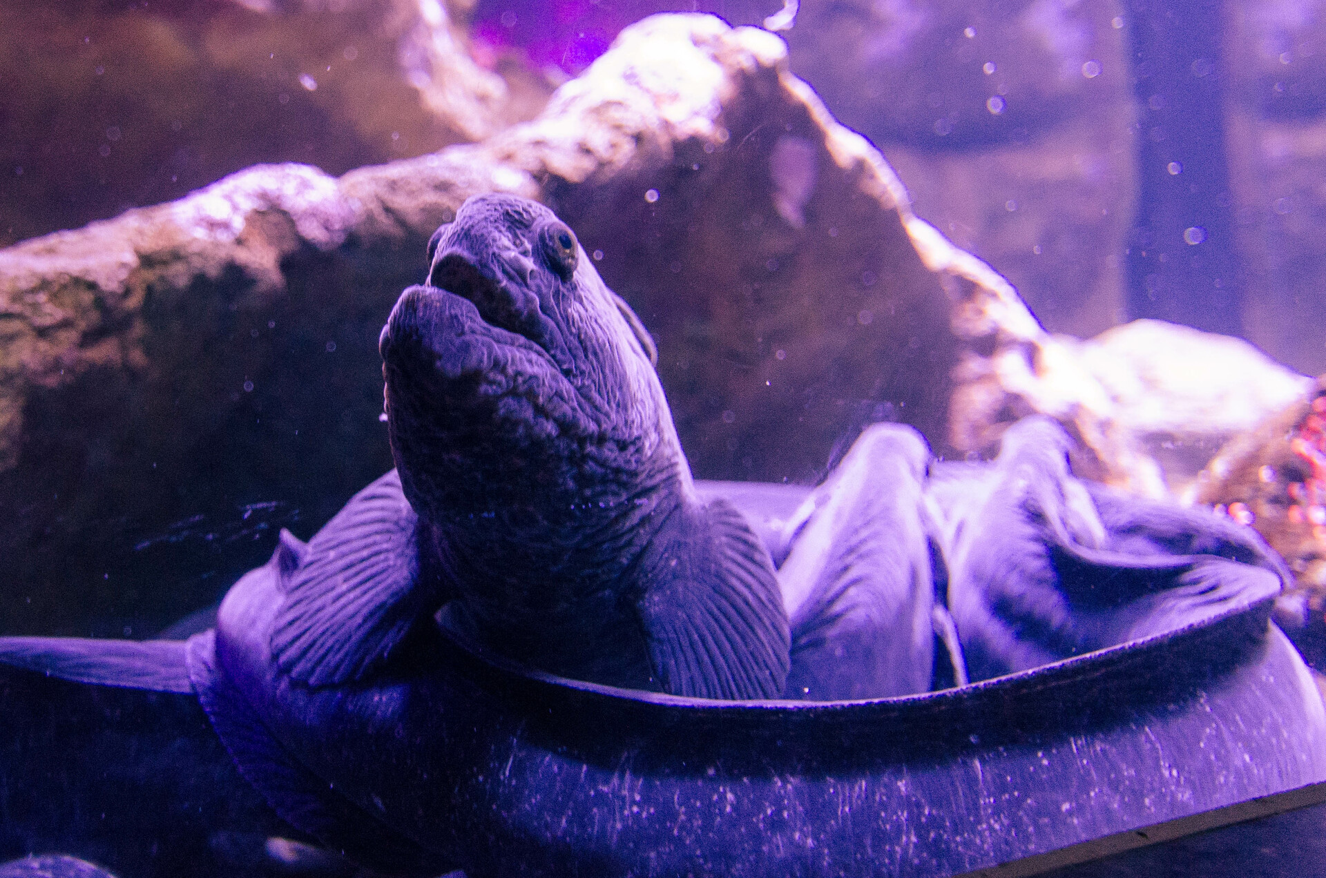 Mustafa kazmi aquarium march 109