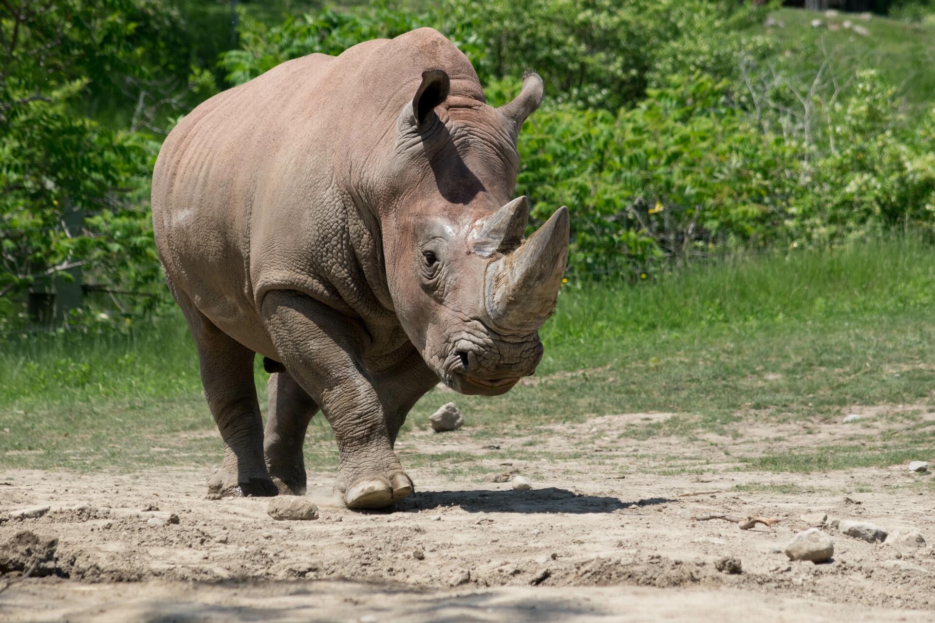 Mustafa kazmi may 30th 2018 toronto zoo 207