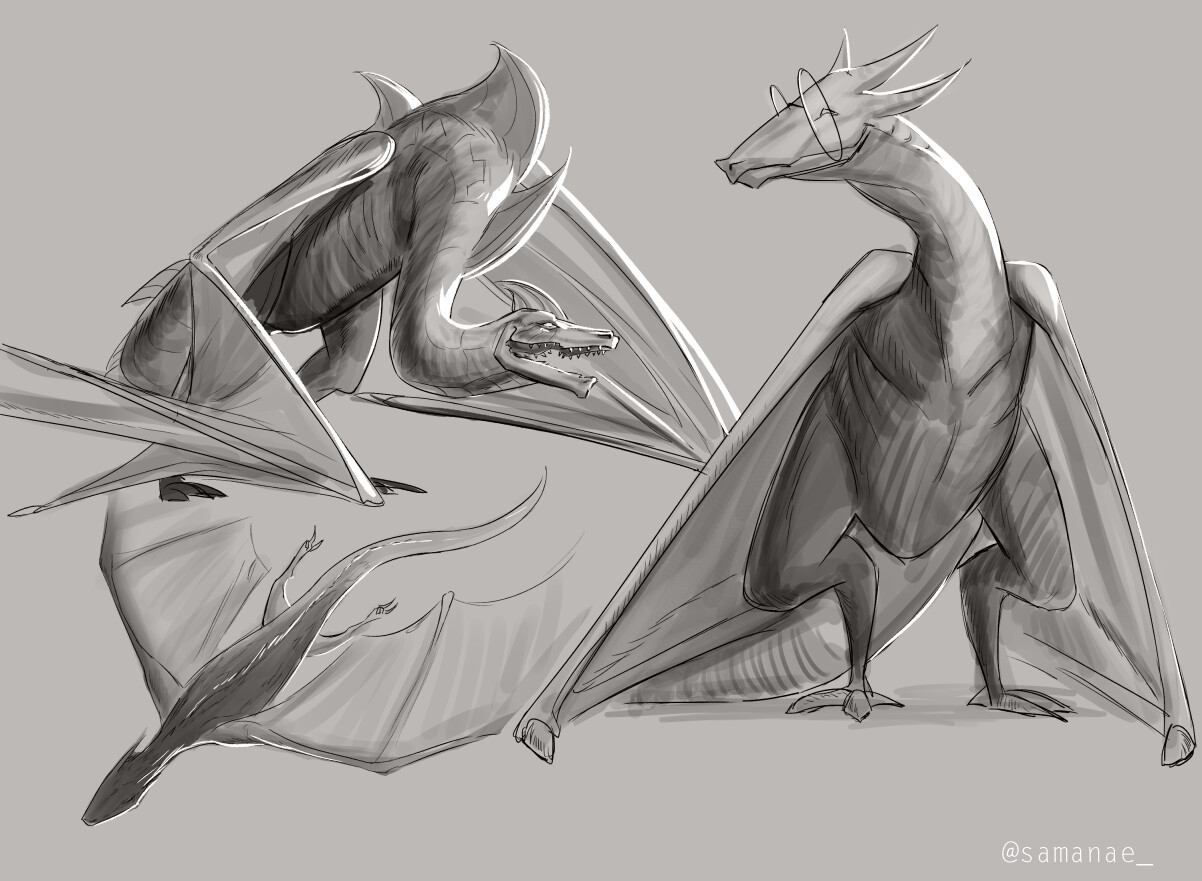 Samia rachid dragon sketches