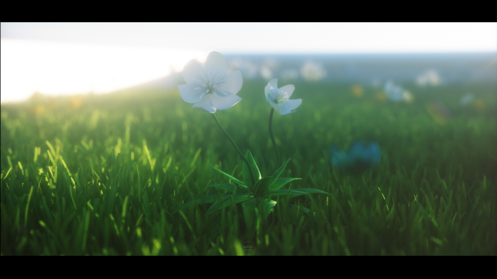 Nirinsow flowers