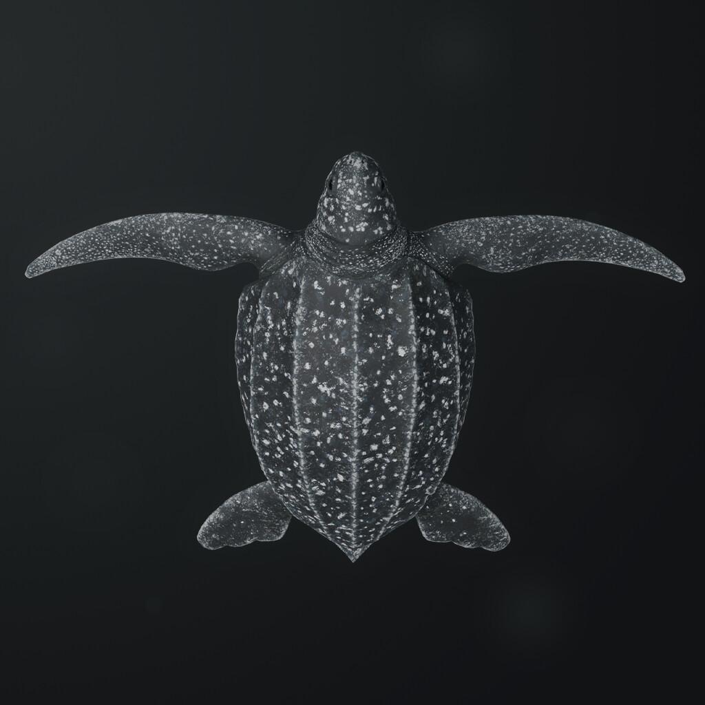 Eugenio stanislav leatherback sea turtle 01