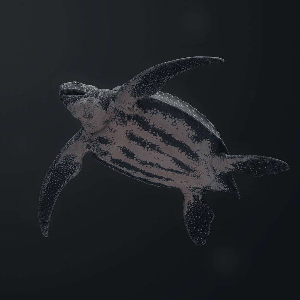 Eugenio stanislav leatherback sea turtle 02