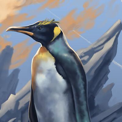Marco pennacchietti pinguino