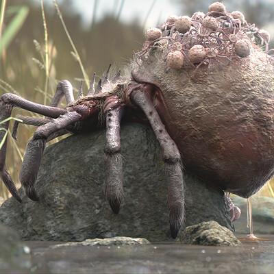 Andy sutton spidercreak v001as