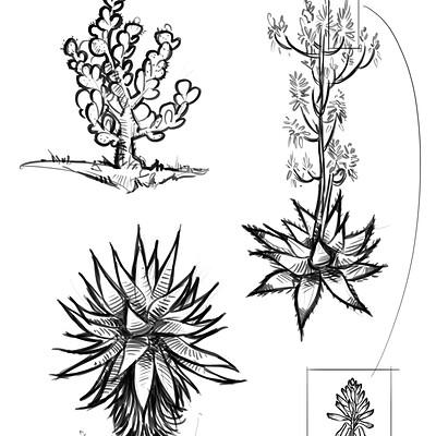 Aretha battistutta piante17