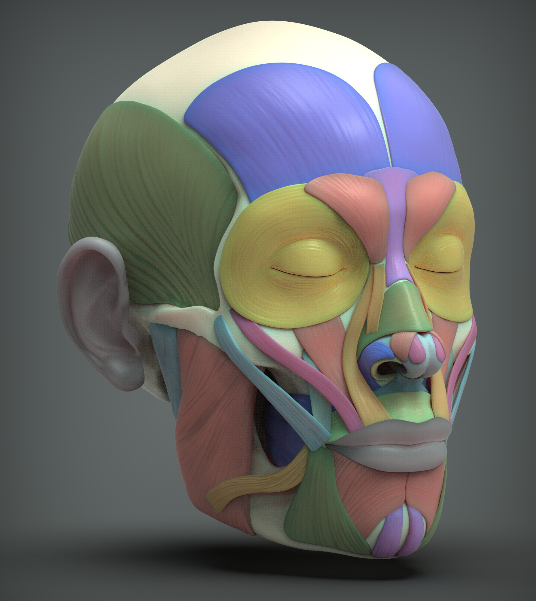 John deriggi face human anatomy 02