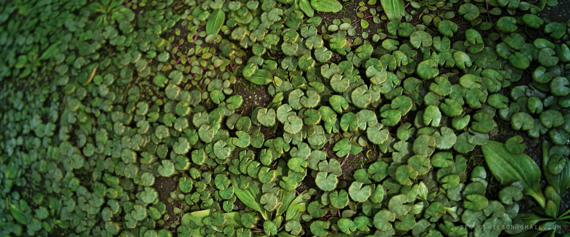 Ben wilson ground plants a 02