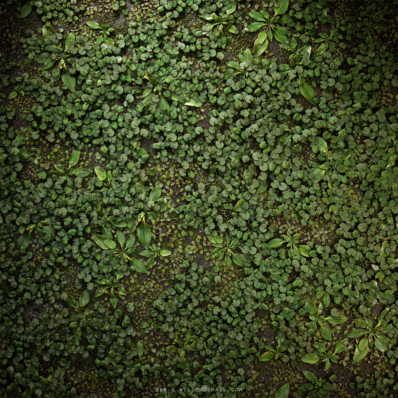 Ben wilson ground plants a 01