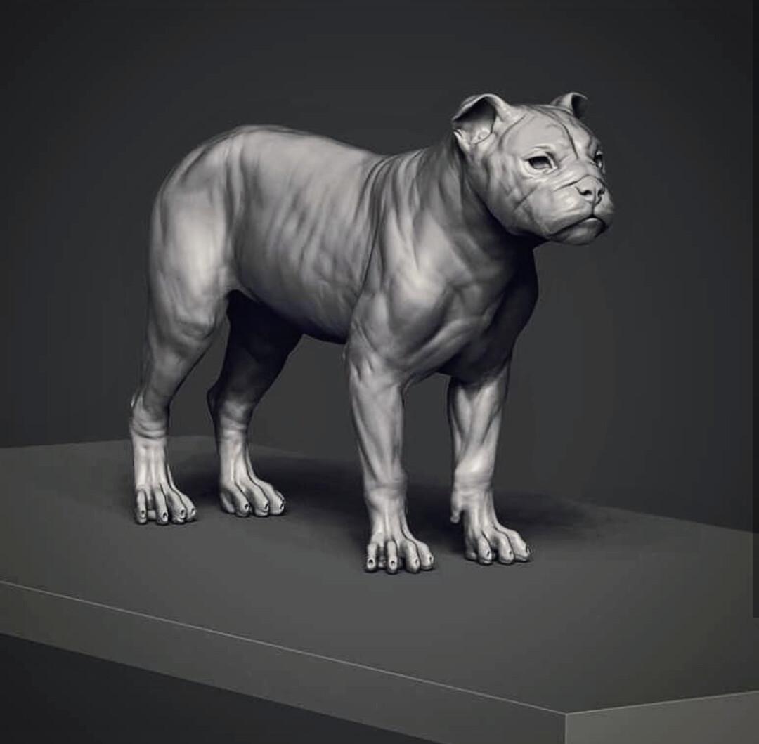 or a Lynx dog...