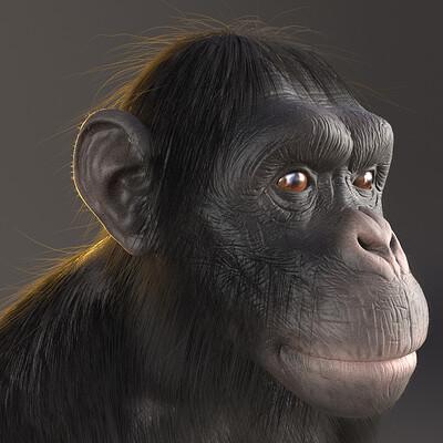 Alex silva chimpanze render 03 physcamera004