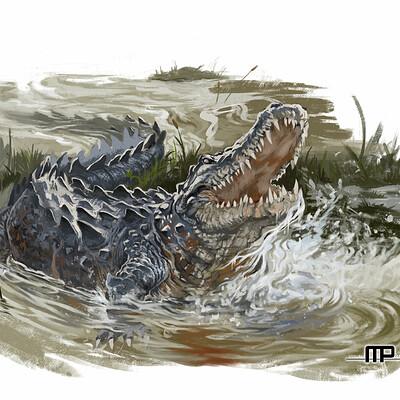 Marco pennacchietti alligatore33ss